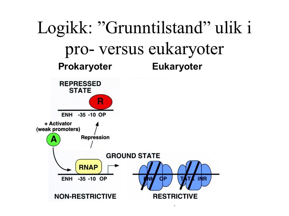 """Logikk: """"Grunntilstand"""" ulik i pro- versus eukaryoter Prokaryoter Eukaryoter"""