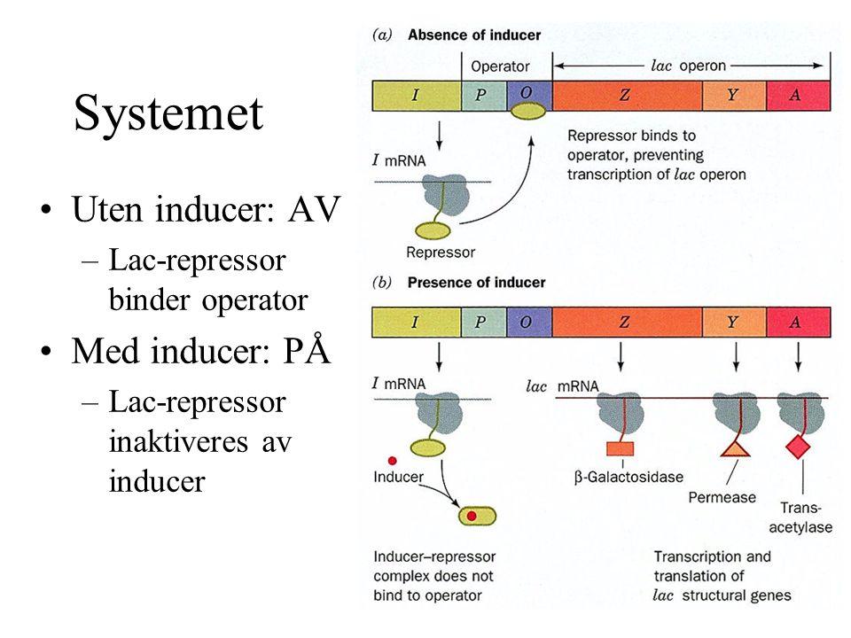 Systemet Uten inducer: AV –Lac-repressor binder operator Med inducer: PÅ –Lac-repressor inaktiveres av inducer