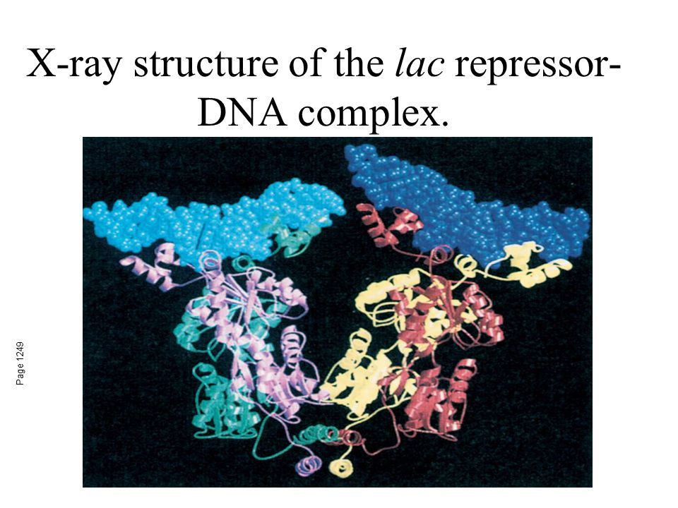 X-ray structure of the lac repressor- DNA complex. Page 1249
