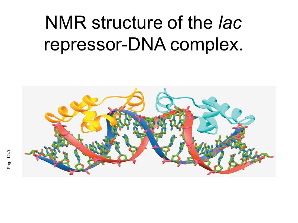 NMR structure of the lac repressor-DNA complex. Page 1249