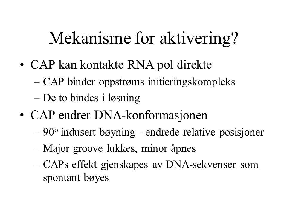 Mekanisme for aktivering? CAP kan kontakte RNA pol direkte –CAP binder oppstrøms initieringskompleks –De to bindes i løsning CAP endrer DNA-konformasj
