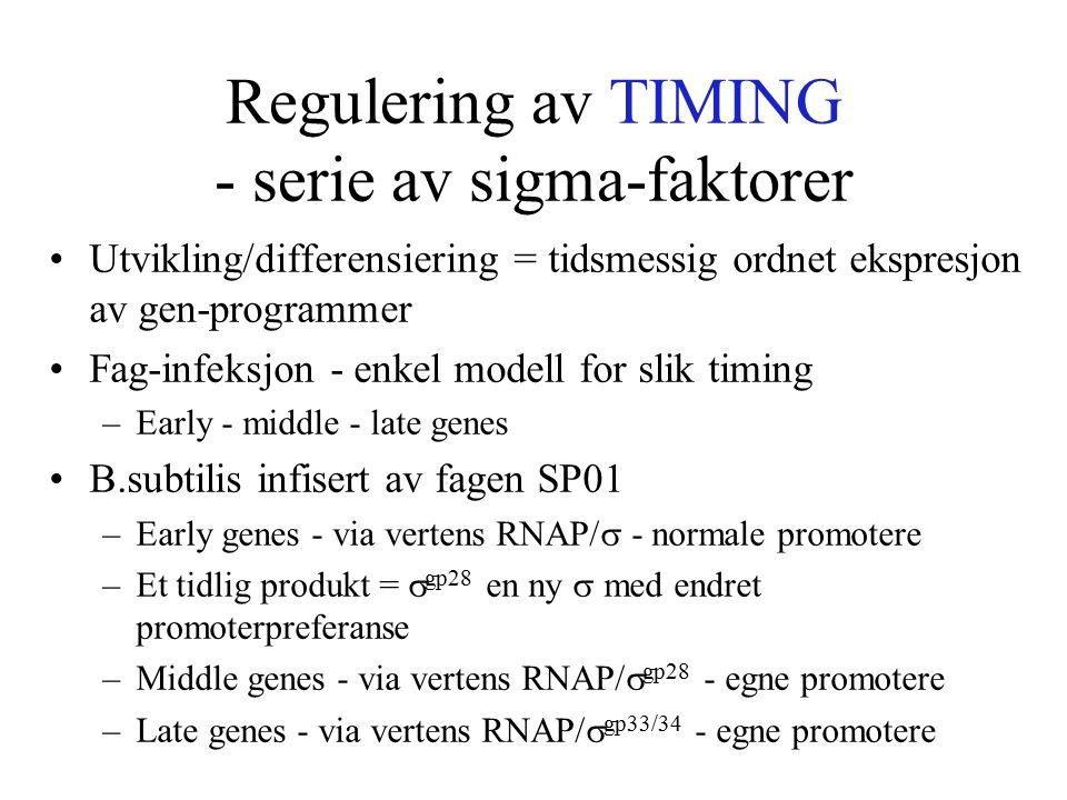 Regulering av TIMING - serie av sigma-faktorer Utvikling/differensiering = tidsmessig ordnet ekspresjon av gen-programmer Fag-infeksjon - enkel modell