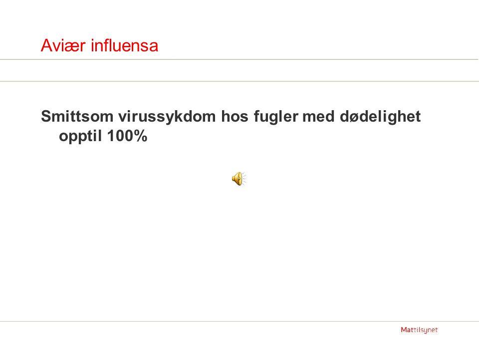 Aviær influensa Smittsom virussykdom hos fugler med dødelighet opptil 100%
