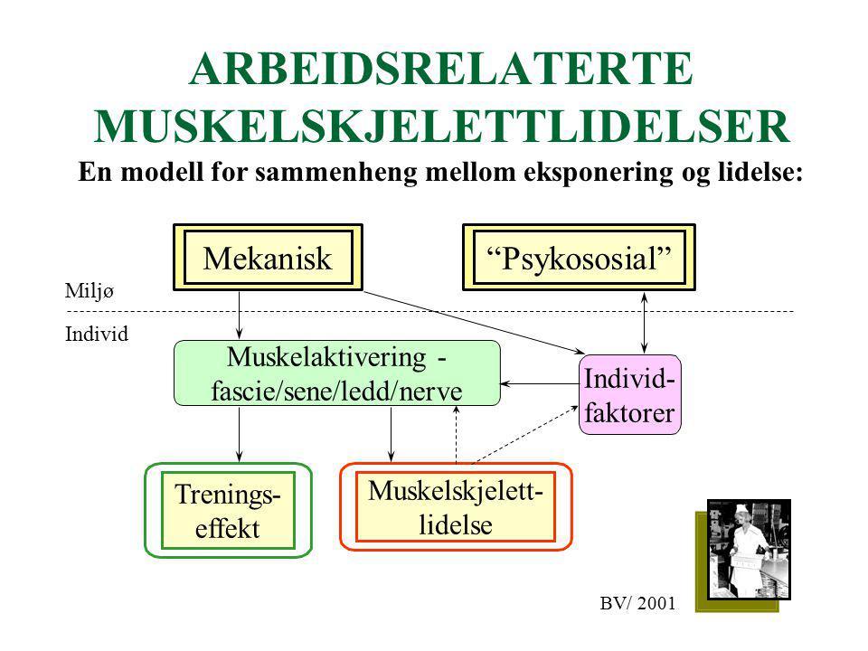 ARBEIDSRELATERTE MUSKELSKJELETTLIDELSER En modell for sammenheng mellom eksponering og lidelse: Psykososial Mekanisk Muskelaktivering - fascie/sene/ledd/nerve Trenings- effekt Muskelskjelett- lidelse Individ- faktorer Miljø Individ BV/ 2001