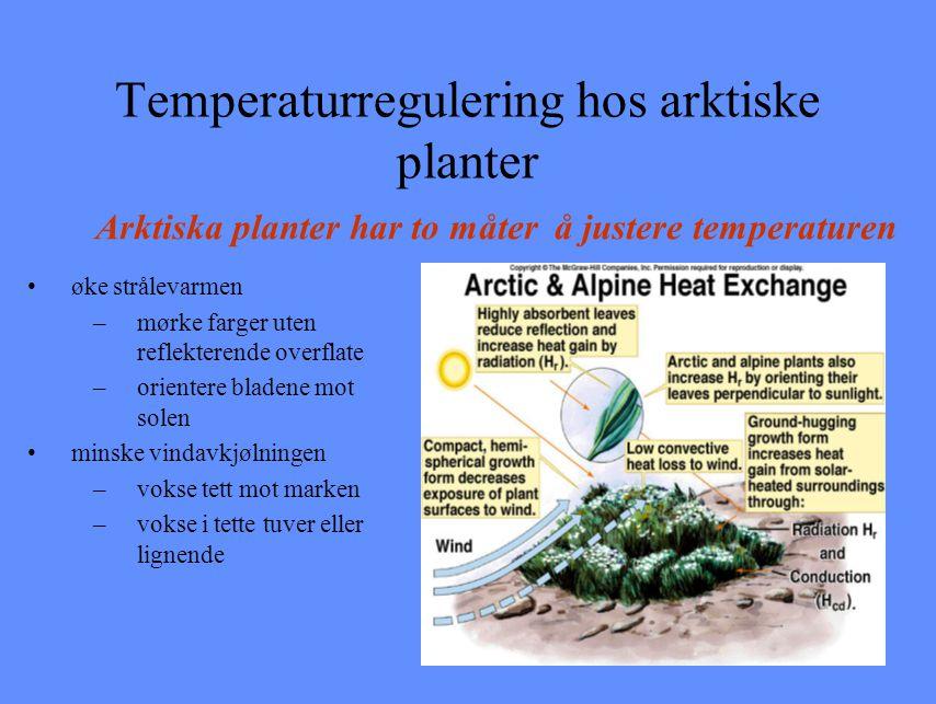 Temperaturregulering hos arktiske planter øke strålevarmen –mørke farger uten reflekterende overflate –orientere bladene mot solen minske vindavkjølni