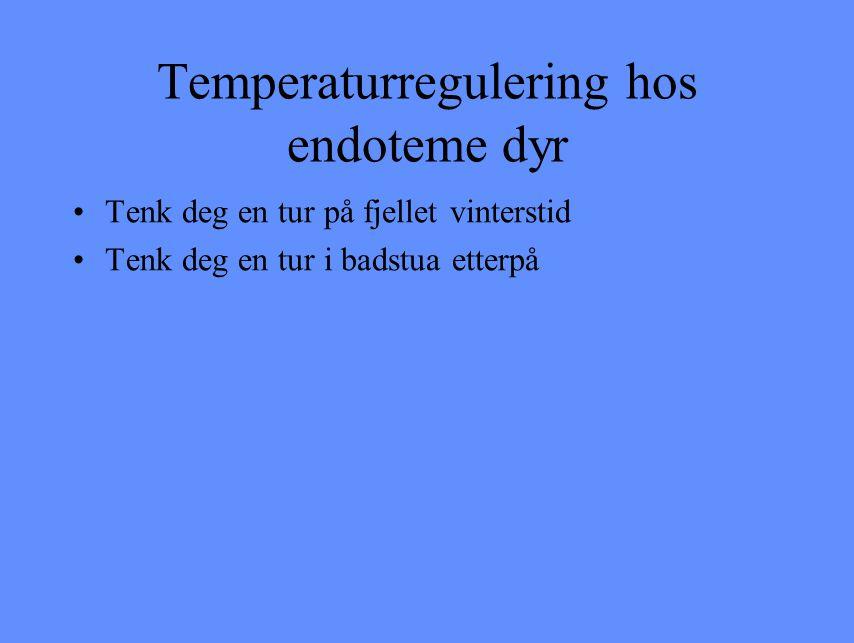 Temperaturregulering hos endoteme dyr Tenk deg en tur på fjellet vinterstid Tenk deg en tur i badstua etterpå