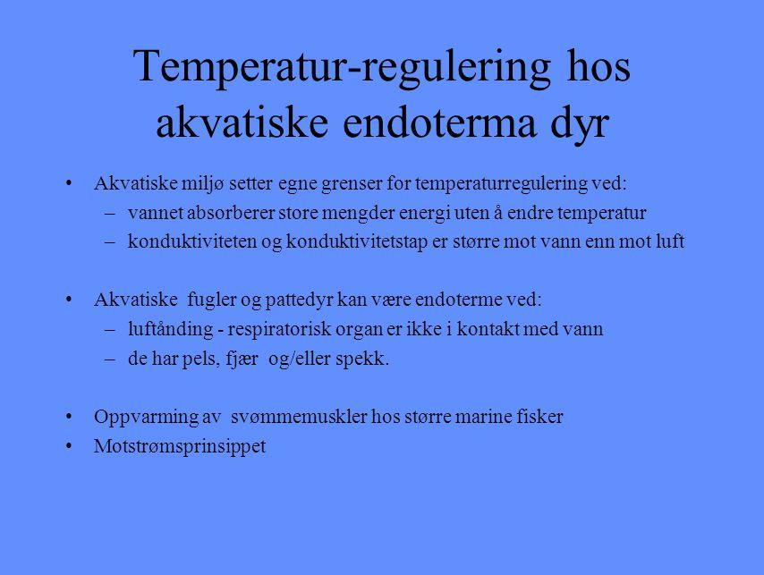 Temperatur-regulering hos akvatiske endoterma dyr Akvatiske miljø setter egne grenser for temperaturregulering ved: –vannet absorberer store mengder e