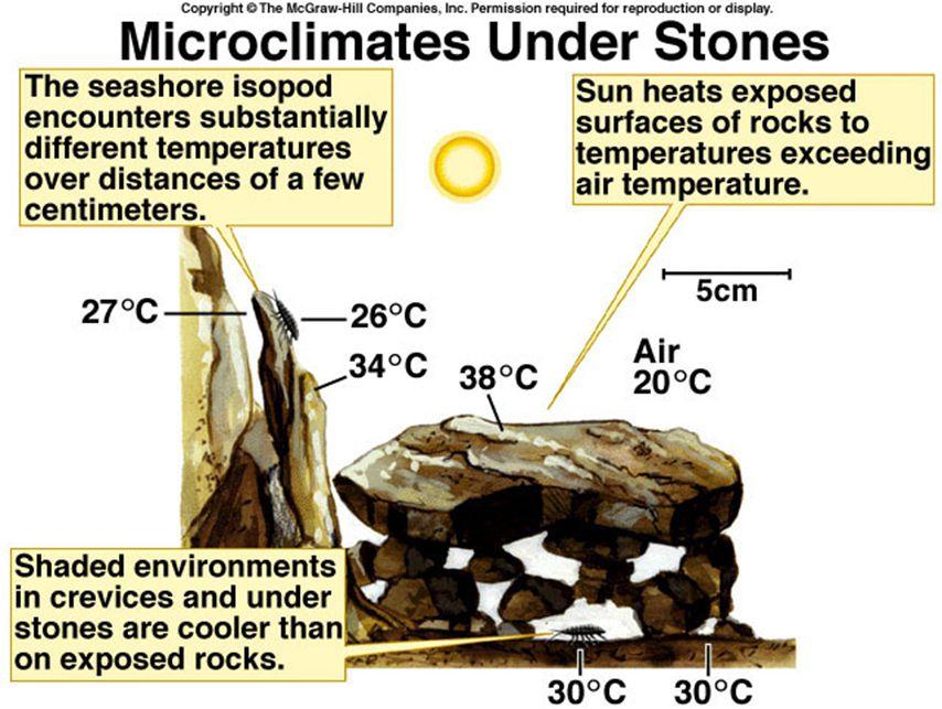 Temperaturregulering hos arktiske planter øke strålevarmen –mørke farger uten reflekterende overflate –orientere bladene mot solen minske vindavkjølningen –vokse tett mot marken –vokse i tette tuver eller lignende Arktiska planter har to måter å justere temperaturen