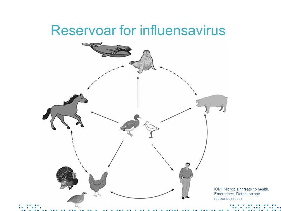 Fugleinfluensa hos mennesker Risiko for smitteoverføring ved tett kontakt med syke fugler Kan ha høy dødelighet Smitter normalt ikke fra person til person Ved dobbeltsmitte (humant og fuglevirus samtidig) kan det oppstå virus med høy virulens og evne til å smitte mellom mennesker –reassortering Kan også tilpasse seg direkte til menneske –mutasjon