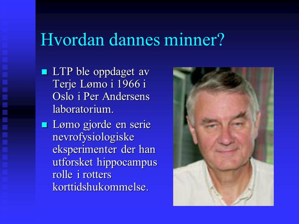 Hvordan dannes minner? LTP ble oppdaget av Terje Lømo i 1966 i Oslo i Per Andersens laboratorium. LTP ble oppdaget av Terje Lømo i 1966 i Oslo i Per A