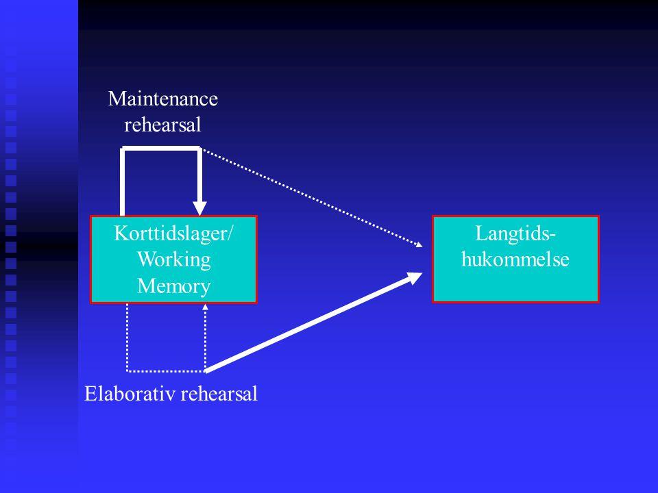 Korttidslager/ Working Memory Maintenance rehearsal Langtids- hukommelse Elaborativ rehearsal