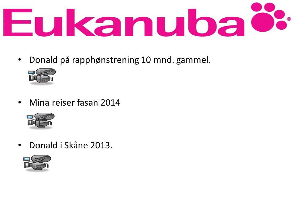 Donald på rapphønstrening 10 mnd. gammel. Mina reiser fasan 2014 Donald i Skåne 2013.
