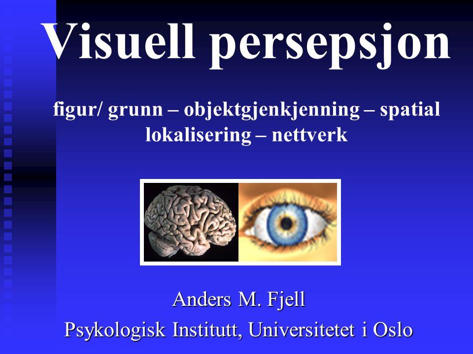 Visuell persepsjon figur/ grunn – objektgjenkjenning – spatial lokalisering – nettverk Anders M.