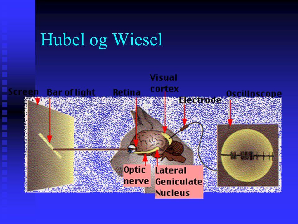 Nevrofysiologisk evidens for trekkteorier Hubel og Wiesels (1963) enkeltcelleopptak i visuell cortex – mappet til korresponderende visuelle stimuli i