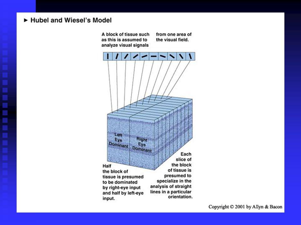 Enkel celle Kompleks celle Hyper- kompleks celle