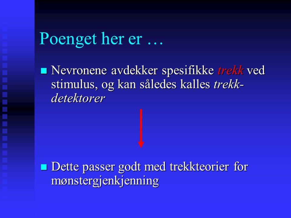 """Dorsale (""""Where"""") og Ventrale (""""What"""") nervebaner i mennesker (PET) Dorsal (where) pathway shown in green and blue and Ventral (what) pathway shown in"""