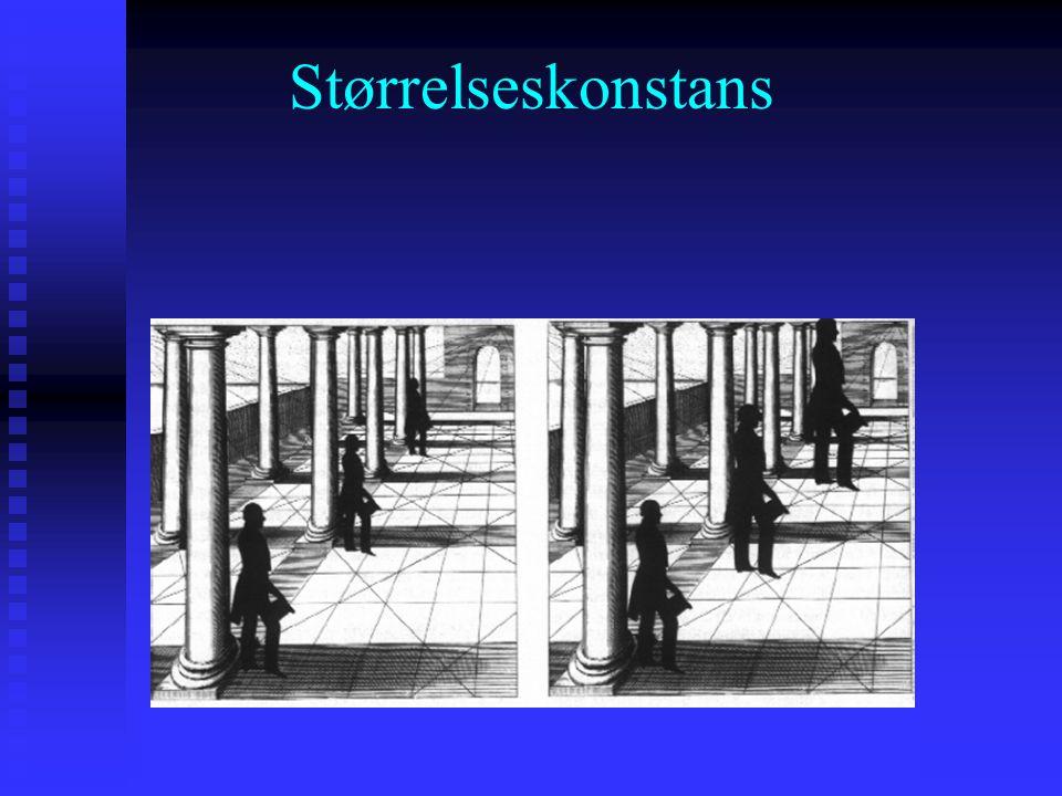 Fokus her: Størrelseskonstans (def) er persepsjonen av at et objekt har den samme størrelsen selv om størrelsen på det proksimate stimulus endres Stør