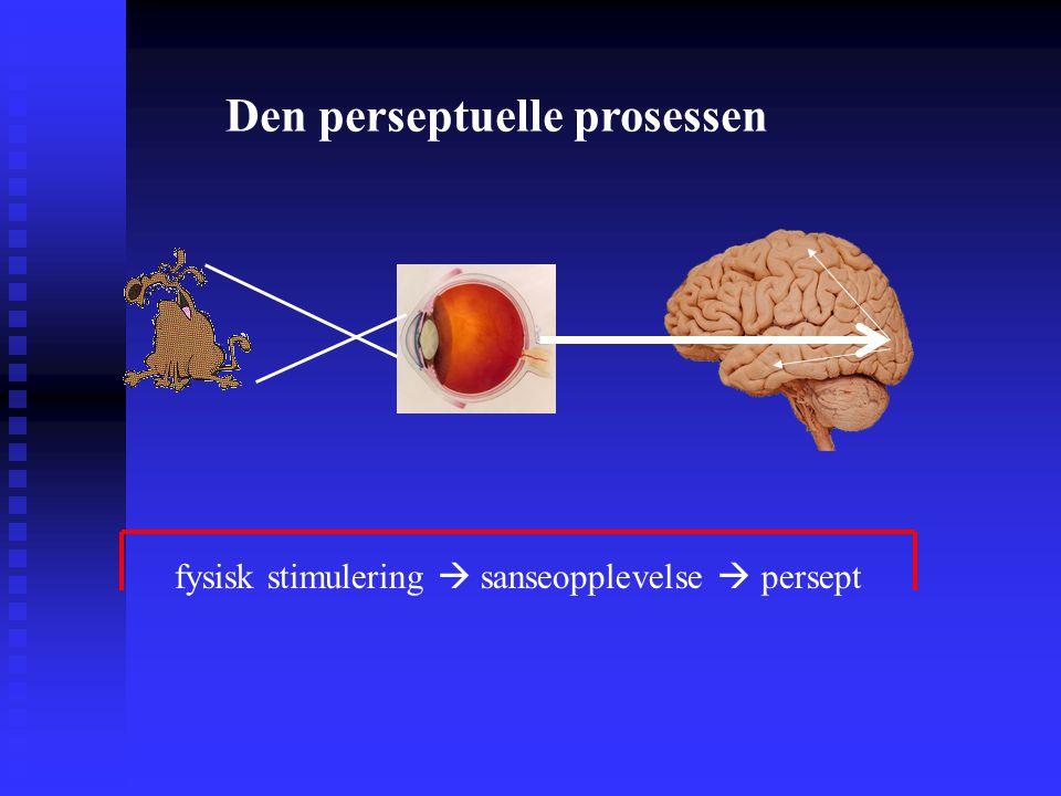 fysisk stimulering  sanseopplevelse  persept Den perseptuelle prosessen