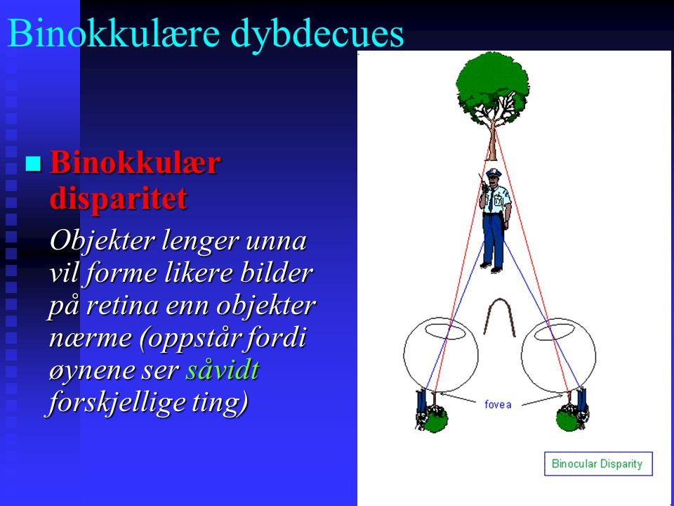 Binokkulære dybdecues Binokkulær disparitet Binokkulær disparitet Objekter lenger unna vil forme likere bilder på retina enn objekter nærme (oppstår fordi øynene ser såvidt forskjellige ting)