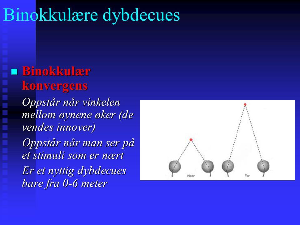 Binokkulære dybdecues Binokkulær konvergens Binokkulær konvergens Oppstår når vinkelen mellom øynene øker (de vendes innover) Oppstår når man ser på et stimuli som er nært Oppstår når man ser på et stimuli som er nært Er et nyttig dybdecues bare fra 0-6 meter Er et nyttig dybdecues bare fra 0-6 meter