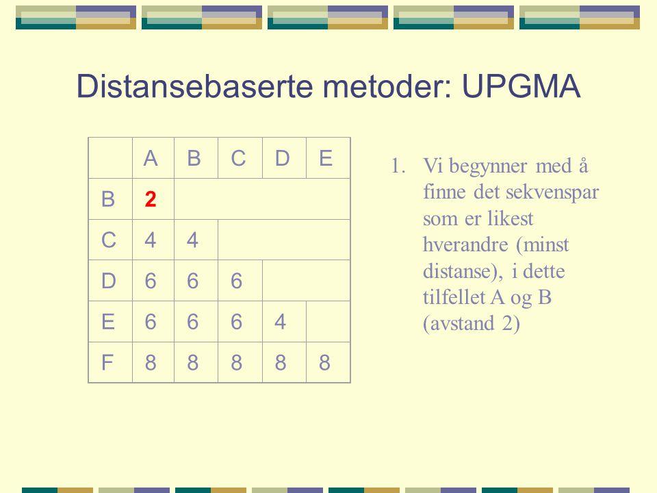 Distansebaserte metoder: UPGMA A B C D E B 2 C 4 4 D 6 6 6 E 6 6 6 4 F 8 8 8 8 8 1.Vi begynner med å finne det sekvenspar som er likest hverandre (minst distanse), i dette tilfellet A og B (avstand 2)