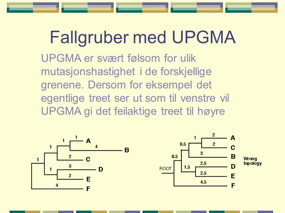 Fallgruber med UPGMA UPGMA er svært følsom for ulik mutasjonshastighet i de forskjellige grenene.