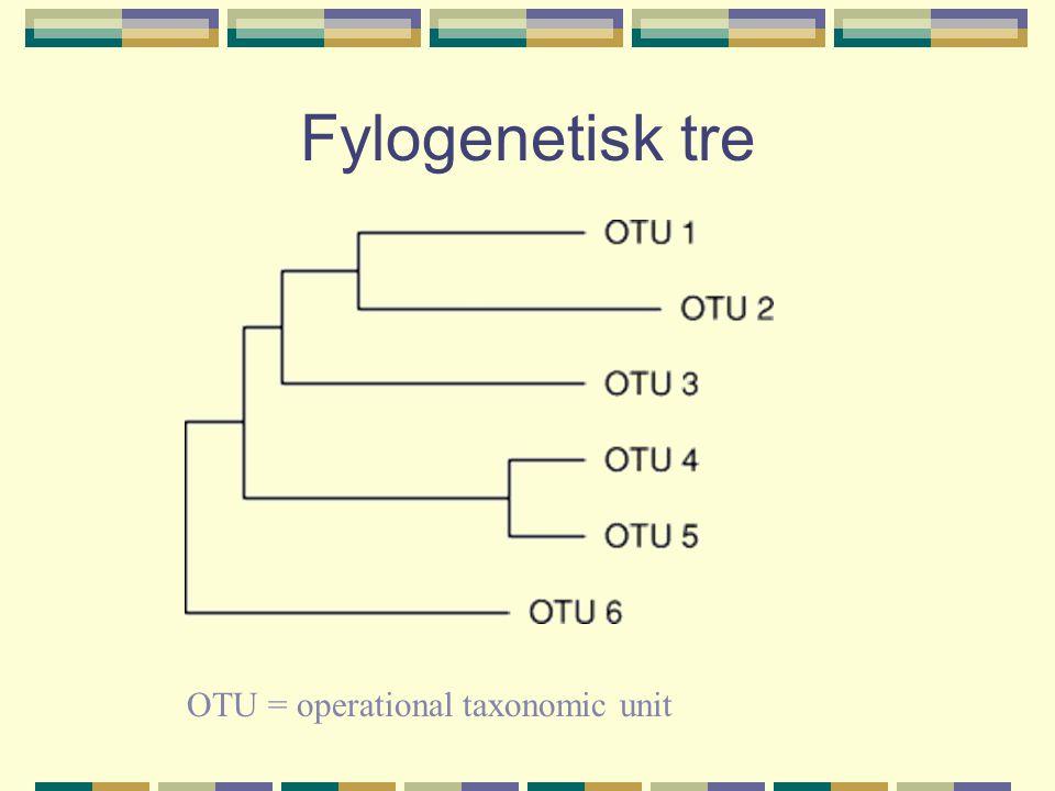 Fylogenetisk tre OTU = operational taxonomic unit