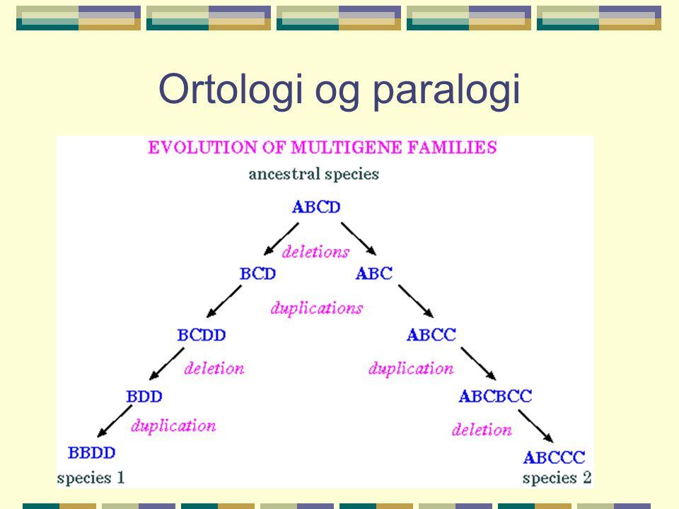 Ortologi og paralogi