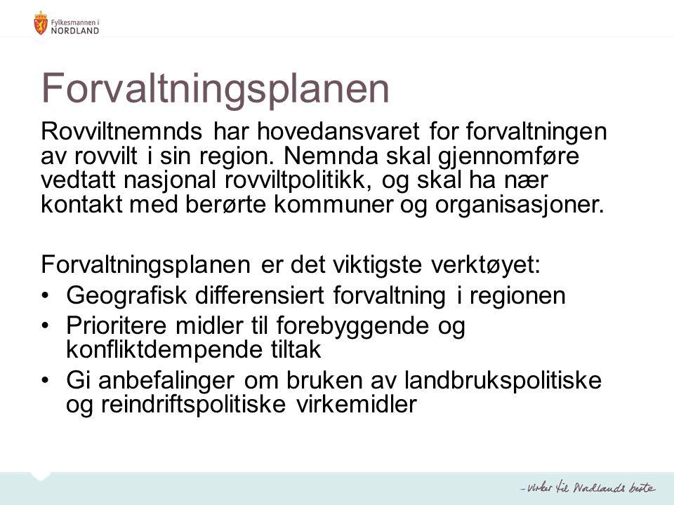 Forvaltningsplanen Rovviltnemnds har hovedansvaret for forvaltningen av rovvilt i sin region.