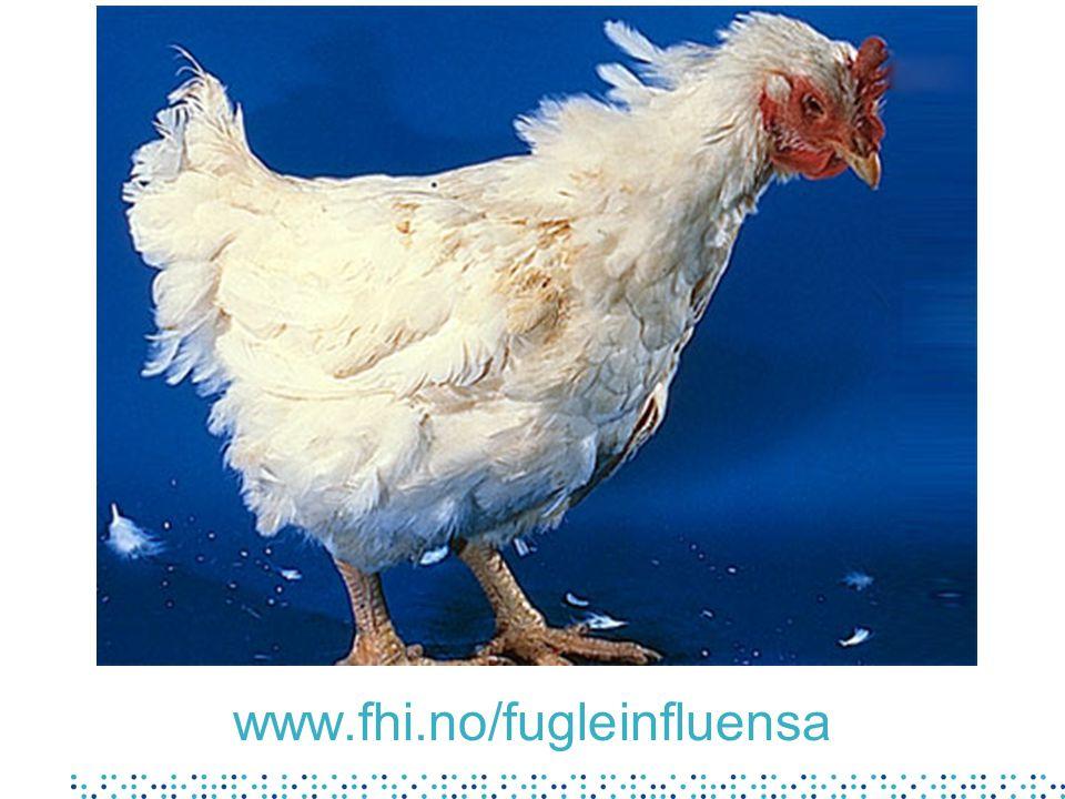 www.fhi.no/fugleinfluensa