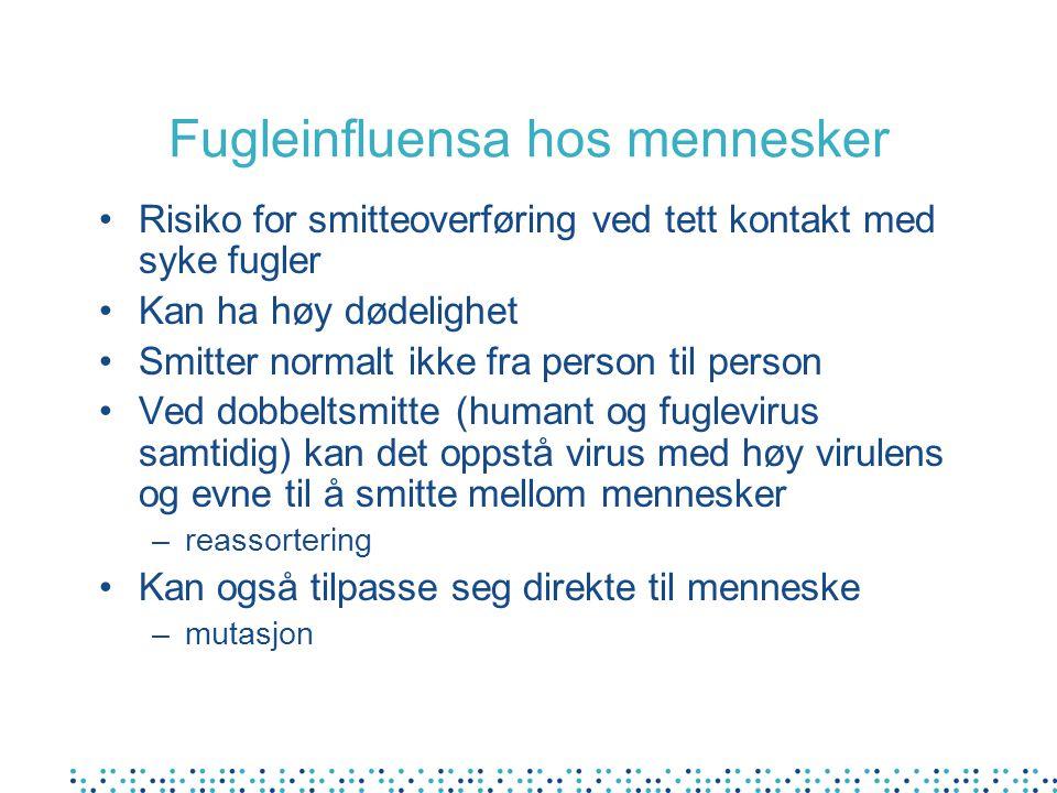 Fugleinfluensa hos mennesker Risiko for smitteoverføring ved tett kontakt med syke fugler Kan ha høy dødelighet Smitter normalt ikke fra person til pe