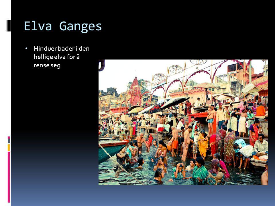 Elva Ganges Hinduer bader i den hellige elva for å rense seg