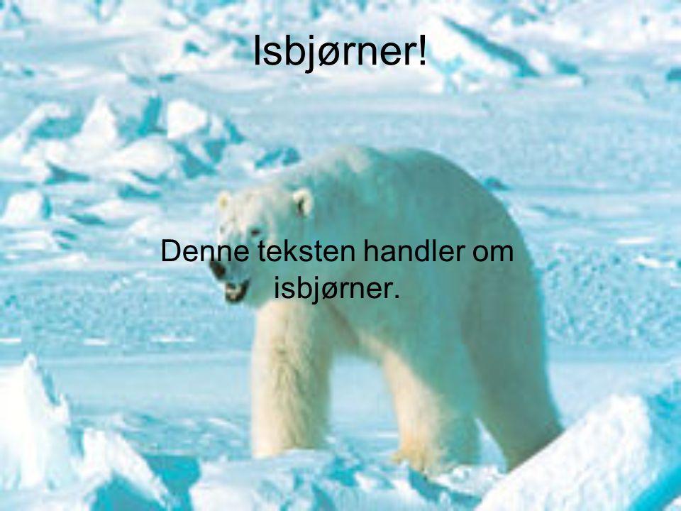 Isbjørner! Denne teksten handler om isbjørner.