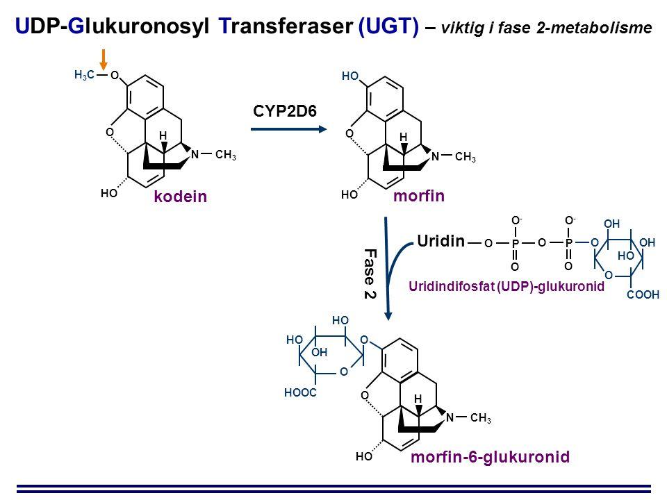 O HOOC O HO OH O H NCH 3 HO O O H NCH 3 HO H3CH3C kodein morfin-6-glukuronid CYP2D6 Fase 2 O COOH O OH HO P O O P O O O-O- O-O- Uridin O HO H NCH 3 HO morfin UDP-Glukuronosyl Transferaser (UGT) – viktig i fase 2-metabolisme Uridindifosfat (UDP)-glukuronid