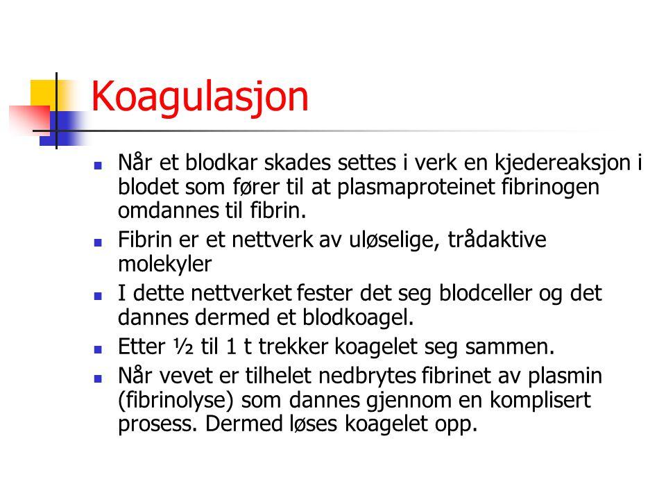 Koagulasjon Når et blodkar skades settes i verk en kjedereaksjon i blodet som fører til at plasmaproteinet fibrinogen omdannes til fibrin. Fibrin er e