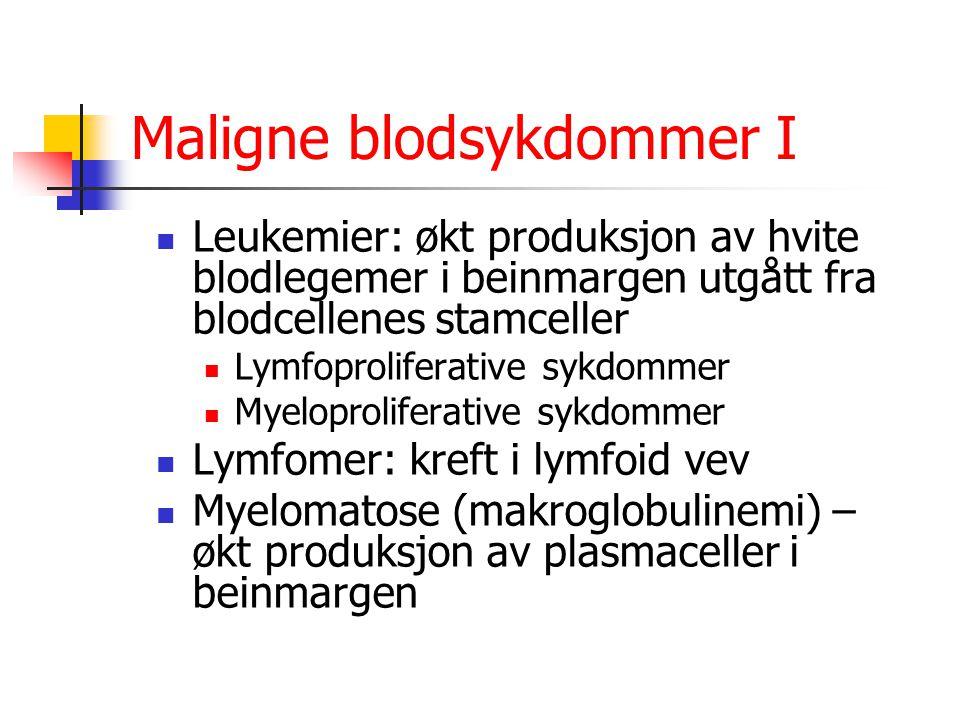 Maligne blodsykdommer I Leukemier: økt produksjon av hvite blodlegemer i beinmargen utgått fra blodcellenes stamceller Lymfoproliferative sykdommer My