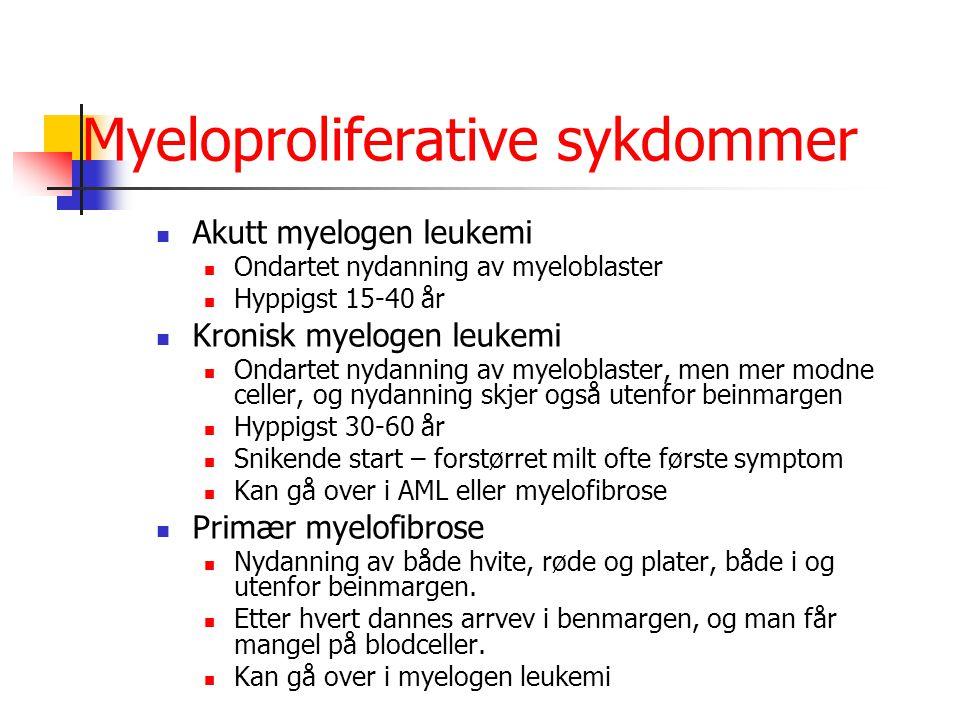 Myeloproliferative sykdommer Akutt myelogen leukemi Ondartet nydanning av myeloblaster Hyppigst 15-40 år Kronisk myelogen leukemi Ondartet nydanning a