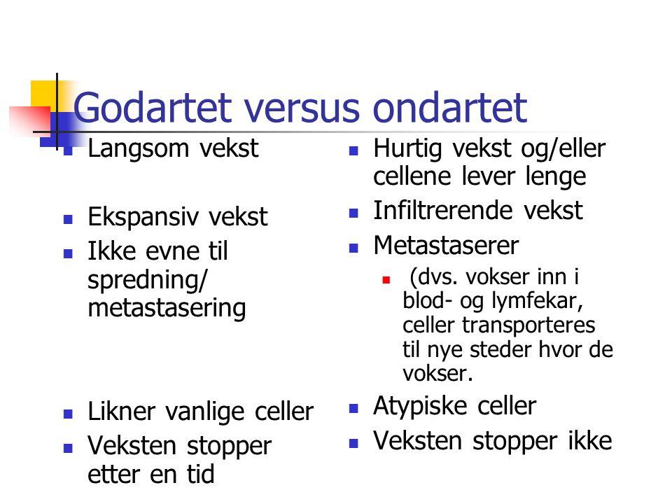 Godartet versus ondartet Langsom vekst Ekspansiv vekst Ikke evne til spredning/ metastasering Likner vanlige celler Veksten stopper etter en tid Hurtig vekst og/eller cellene lever lenge Infiltrerende vekst Metastaserer (dvs.