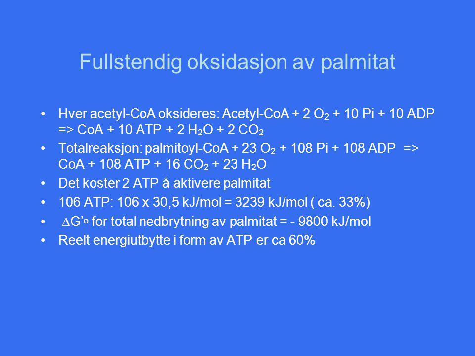 Fullstendig oksidasjon av palmitat Hver acetyl-CoA oksideres: Acetyl-CoA + 2 O 2 + 10 Pi + 10 ADP => CoA + 10 ATP + 2 H 2 O + 2 CO 2 Totalreaksjon: palmitoyl-CoA + 23 O 2 + 108 Pi + 108 ADP => CoA + 108 ATP + 16 CO 2 + 23 H 2 O Det koster 2 ATP å aktivere palmitat 106 ATP: 106 x 30,5 kJ/mol = 3239 kJ/mol ( ca.