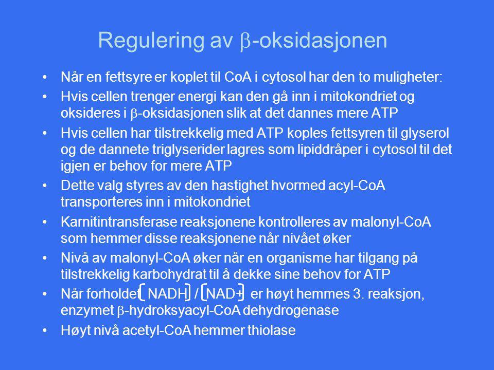 Regulering av  -oksidasjonen Når en fettsyre er koplet til CoA i cytosol har den to muligheter: Hvis cellen trenger energi kan den gå inn i mitokondr