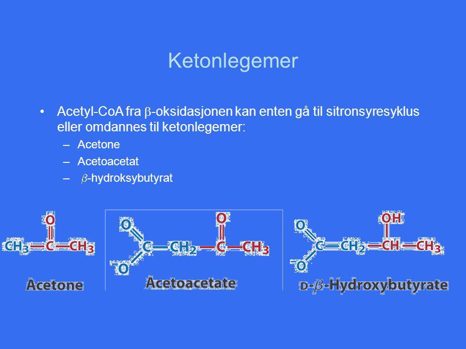 Ketonlegemer Acetyl-CoA fra  -oksidasjonen kan enten gå til sitronsyresyklus eller omdannes til ketonlegemer: –Acetone –Acetoacetat –  -hydroksybutyrat