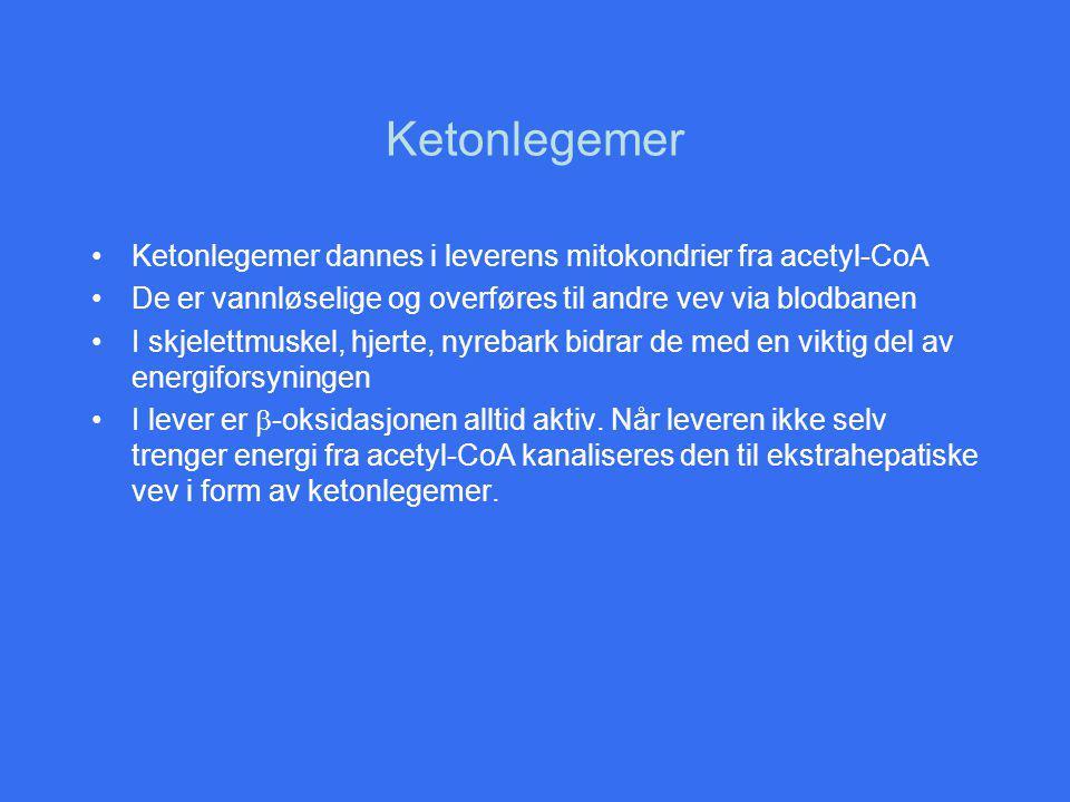 Ketonlegemer Ketonlegemer dannes i leverens mitokondrier fra acetyl-CoA De er vannløselige og overføres til andre vev via blodbanen I skjelettmuskel, hjerte, nyrebark bidrar de med en viktig del av energiforsyningen I lever er  -oksidasjonen alltid aktiv.