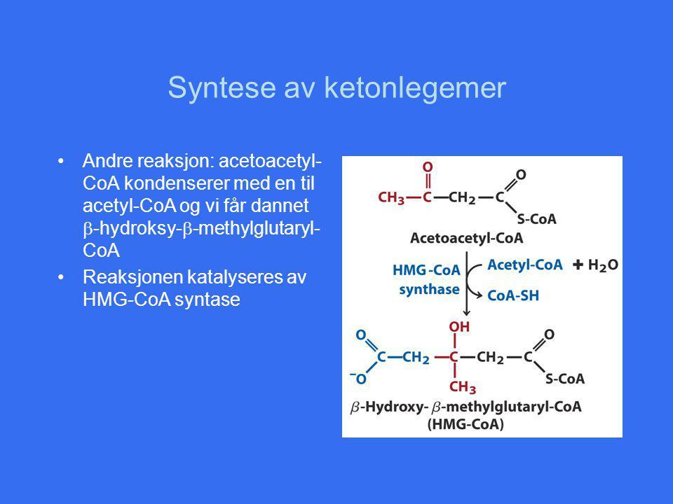 Syntese av ketonlegemer Andre reaksjon: acetoacetyl- CoA kondenserer med en til acetyl-CoA og vi får dannet  -hydroksy-  -methylglutaryl- CoA Reaksjonen katalyseres av HMG-CoA syntase