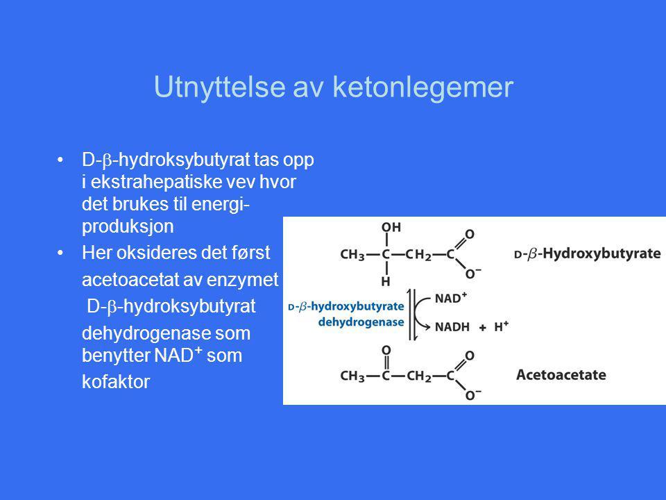 Utnyttelse av ketonlegemer D-  -hydroksybutyrat tas opp i ekstrahepatiske vev hvor det brukes til energi- produksjon Her oksideres det først acetoacetat av enzymet D-  -hydroksybutyrat dehydrogenase som benytter NAD + som kofaktor