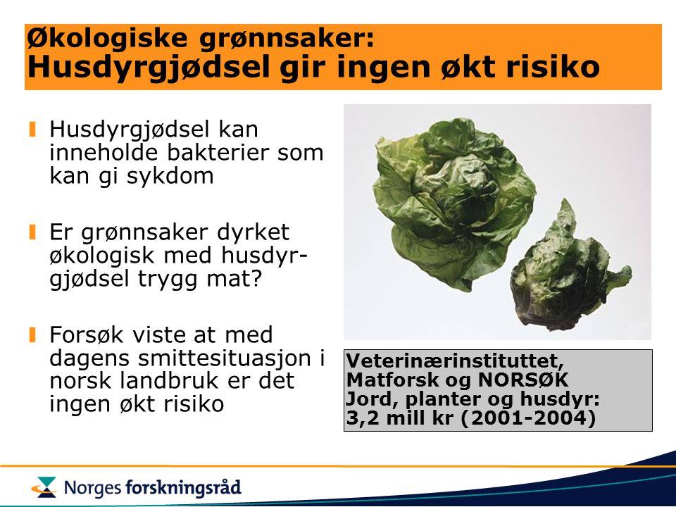 Økologiske grønnsaker: Husdyrgjødsel gir ingen økt risiko Husdyrgjødsel kan inneholde bakterier som kan gi sykdom Er grønnsaker dyrket økologisk med h