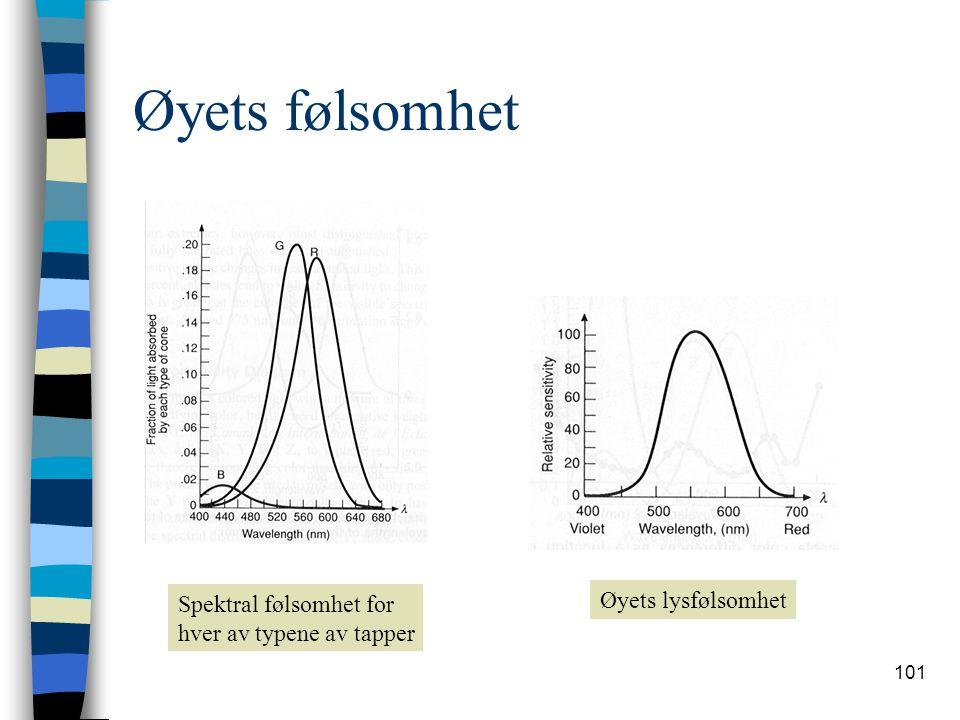 101 Øyets følsomhet Spektral følsomhet for hver av typene av tapper Øyets lysfølsomhet