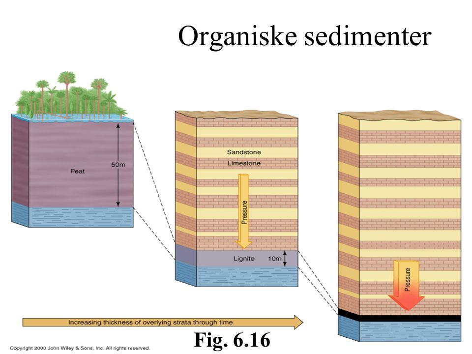 Organiske sedimenter Fig. 6.16