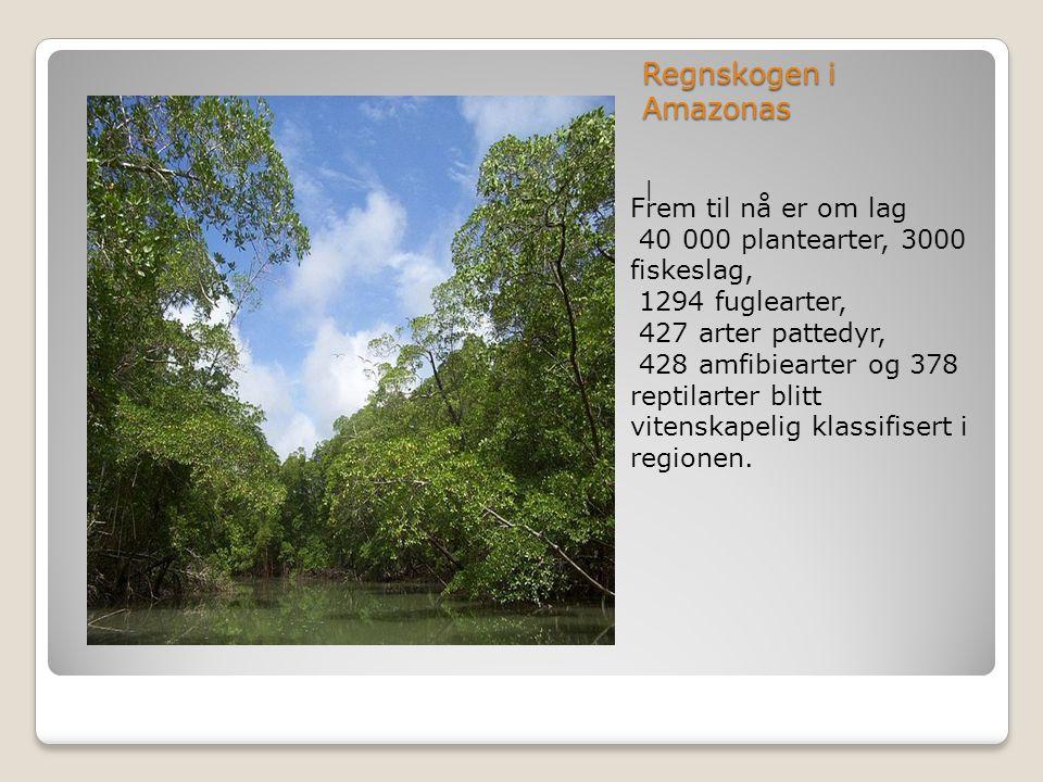 Regnskogen i Amazonas   Frem til nå er om lag 40 000 plantearter, 3000 fiskeslag, 1294 fuglearter, 427 arter pattedyr, 428 amfibiearter og 378 reptila