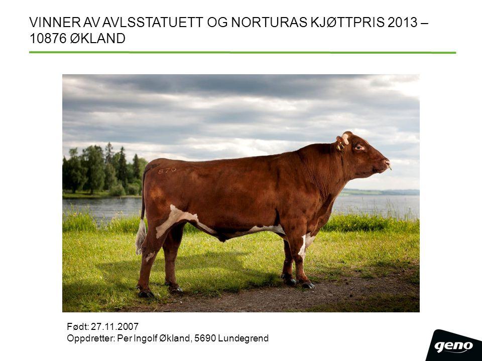 VINNER AV AVLSSTATUETT OG NORTURAS KJØTTPRIS 2013 – 10876 ØKLAND Født: 27.11.2007 Oppdretter: Per Ingolf Økland, 5690 Lundegrend