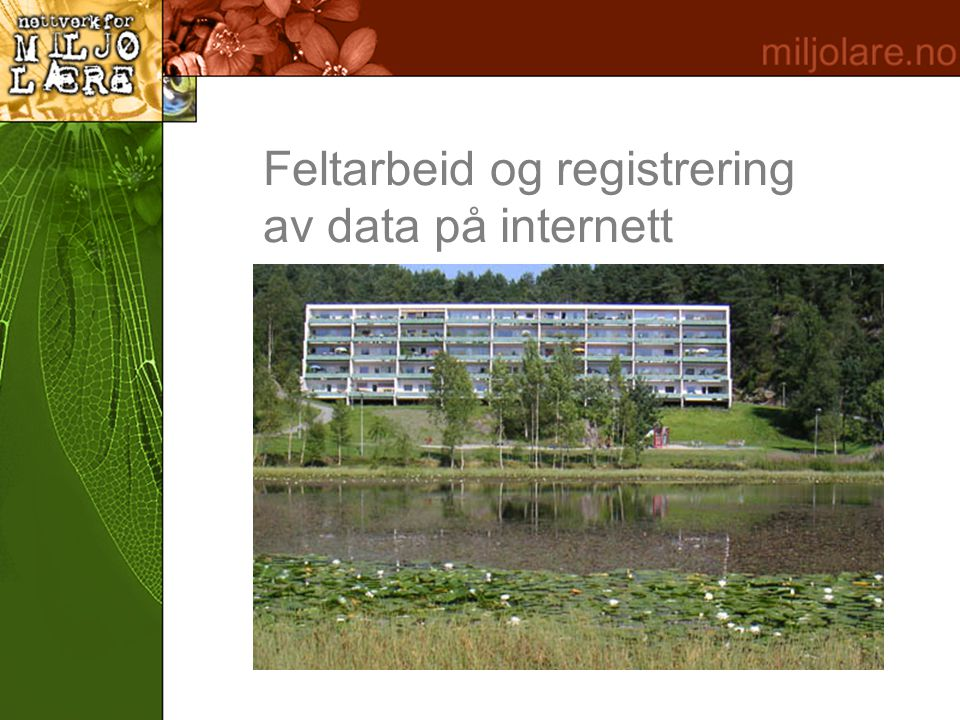 Feltarbeid og registrering av data på internett